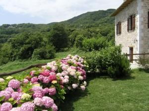 Guesthouse Amanita in Tsagarada - Holiday Pelion - Greece - Exterior 8