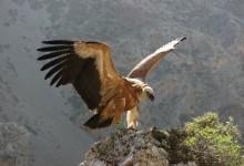 Explore the Kourtaliotiko gorge